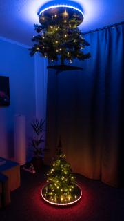 portal_tree-1.jpg