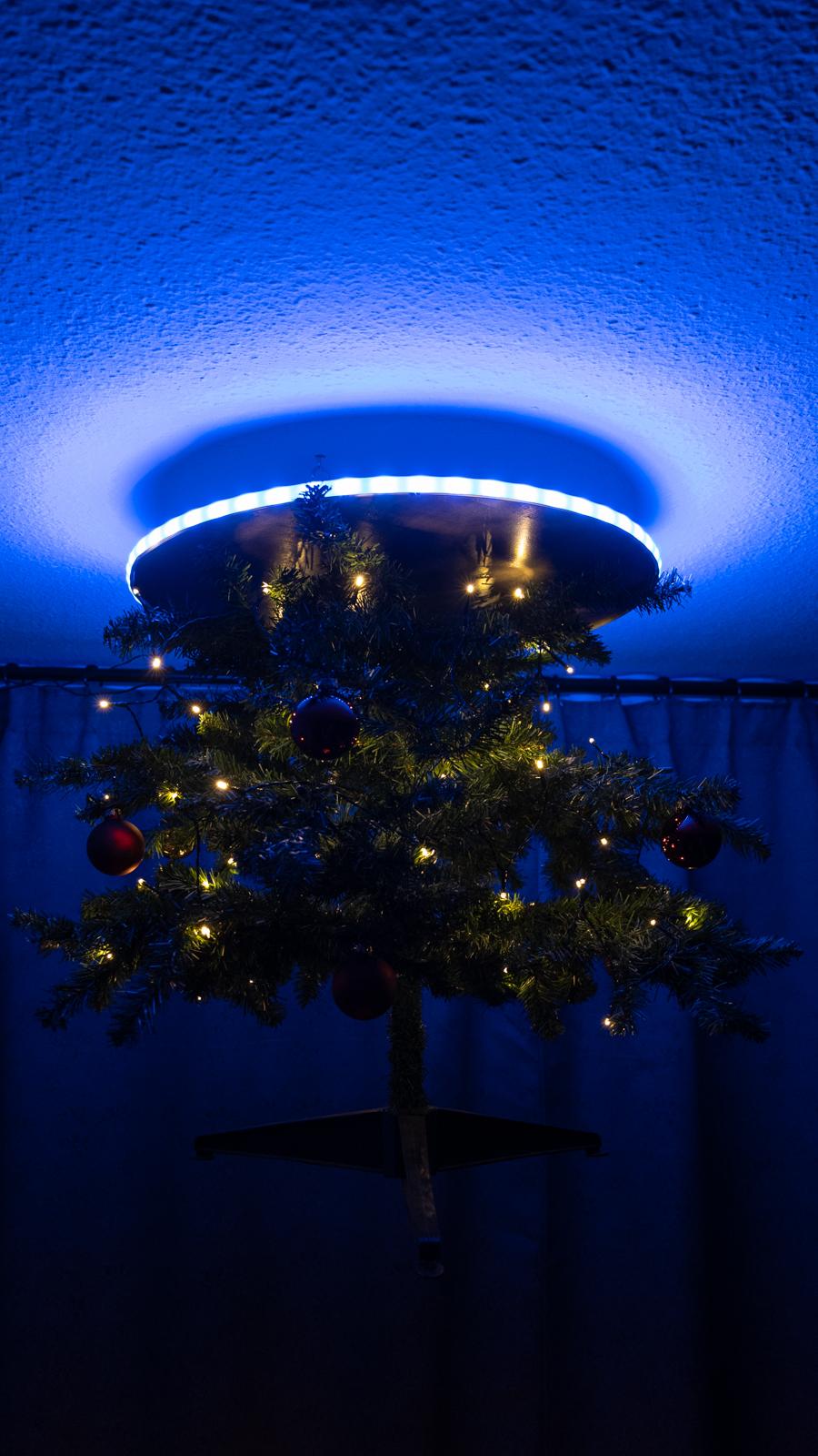 portal_tree-3.jpg
