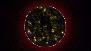 portal_tree-7.jpg