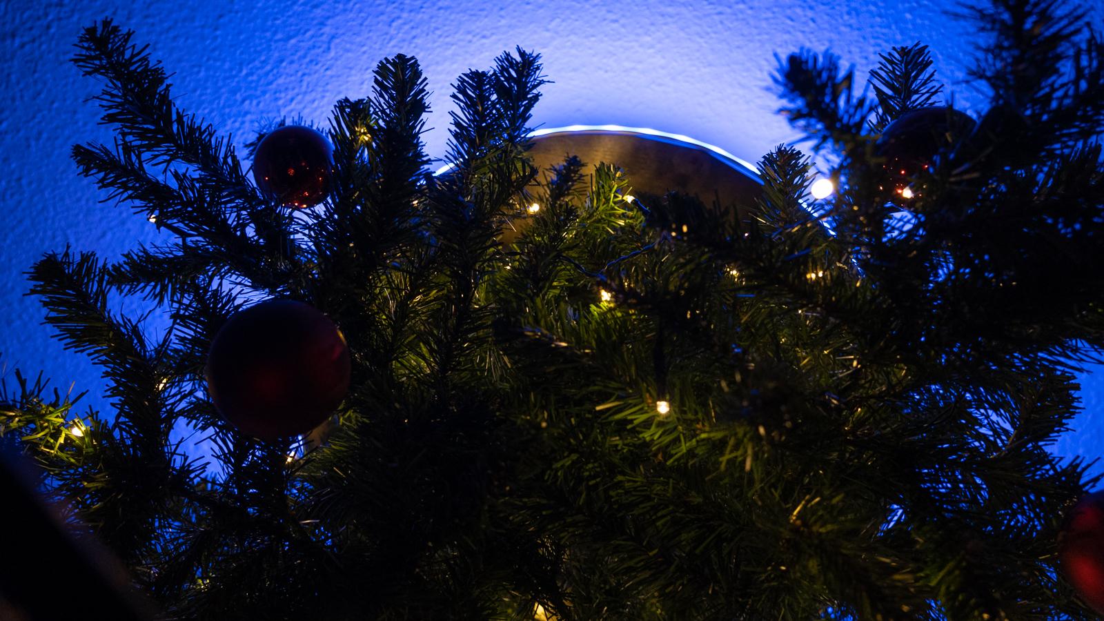 portal_tree-8.jpg
